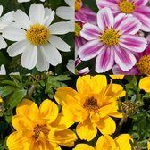 6 Bidens Rare Basket Collection