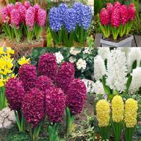 30 Hyacinth Bedding Size Collection