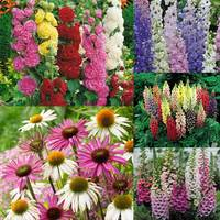 30 Cottage Garden Perennials (5cm Modules)