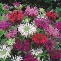 3 Monarda Mixed (Power-Modules)