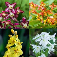 3 Epimedium Mixed