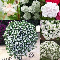 24 Summer White Trailing Basket Collection