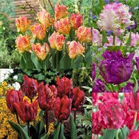 Unusual Parrot Tulip Collection 11/12cm