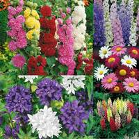 Complete Herbaceous Summer Border Collection