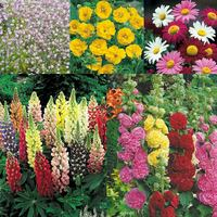 Summer Perennial Border Collection