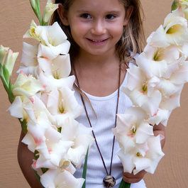 Gladioli Cream Perfection