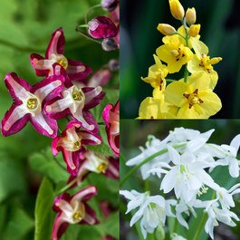 Epimedium Collection