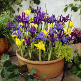 Autumn/Spring Flowering Bulbs