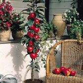 Patio and Dwarf Fruit