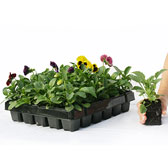 Winter and Spring Garden Ready Plants