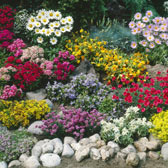 Ground Cover  Perennials(0-25cm)
