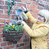 Premium Pre-Planted Hanging Baskets