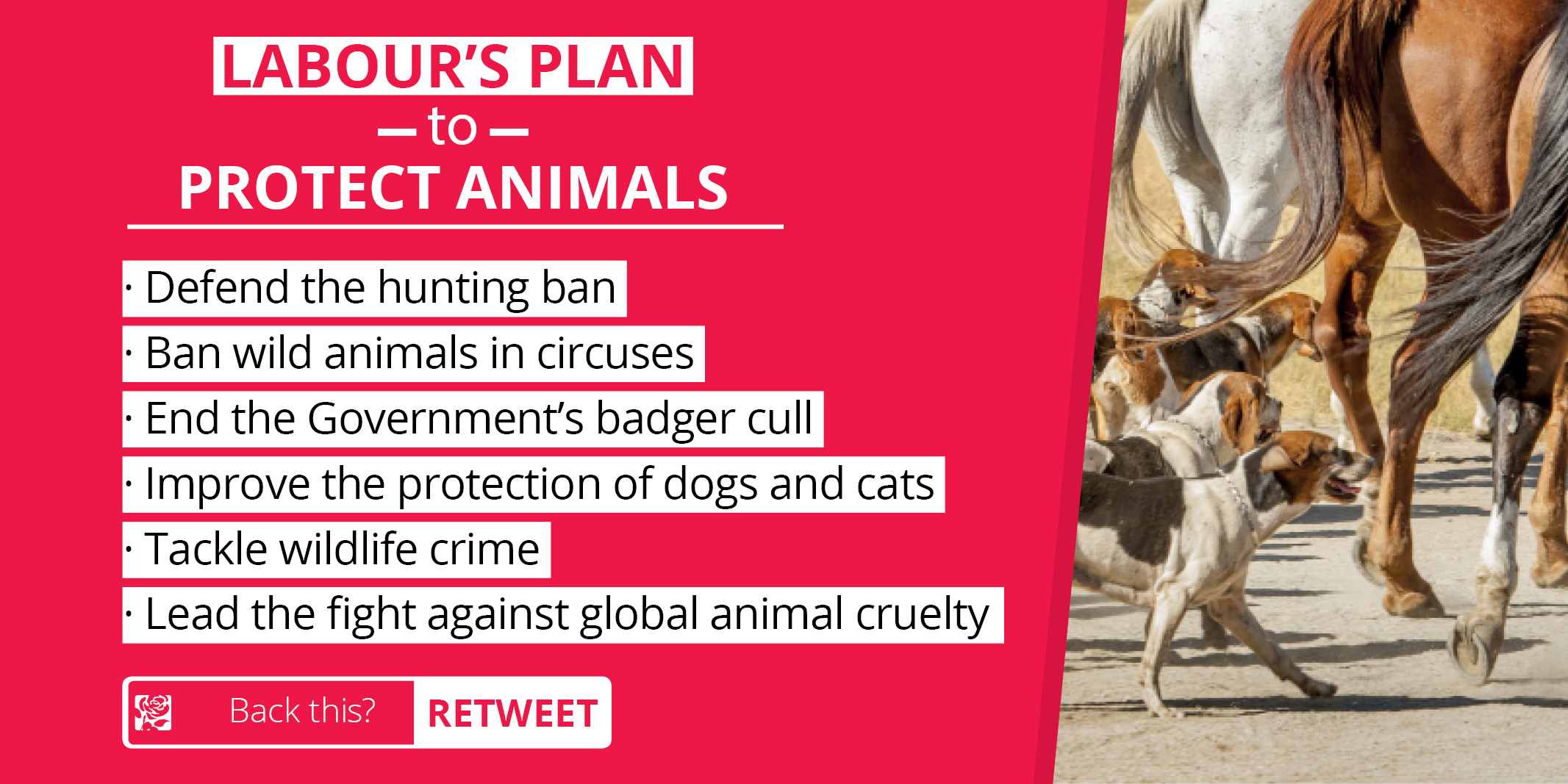 animal_protection_plan_-_twitter_image.png