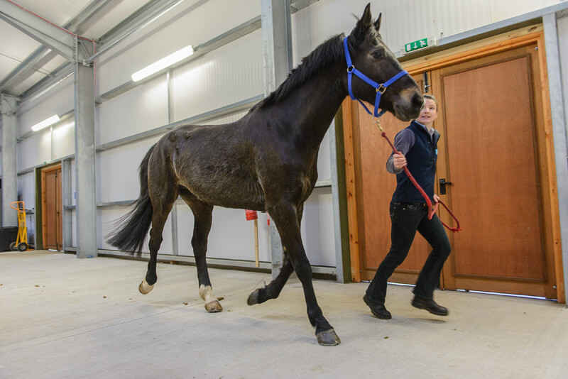 Indoor trotting