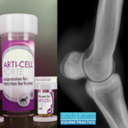 Exciting New Treatment for Degenerative Joint Disease Now Available at LLEP