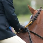 Raising Awareness of Healthy Body Condition in Show Horses