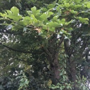 'Perfect storm' has heightened Atypical Myopathy risk warns BEVA