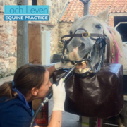 A Day in the Life of An Equine Vet - With Jane Haden MRCVS