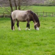 Can you spot an overweight horse?
