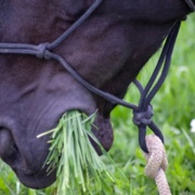 COVID-19 restrictions reveal need for obesity and laminitis care guidelines
