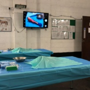 Lower Limb Dissection Workshop a Huge Success