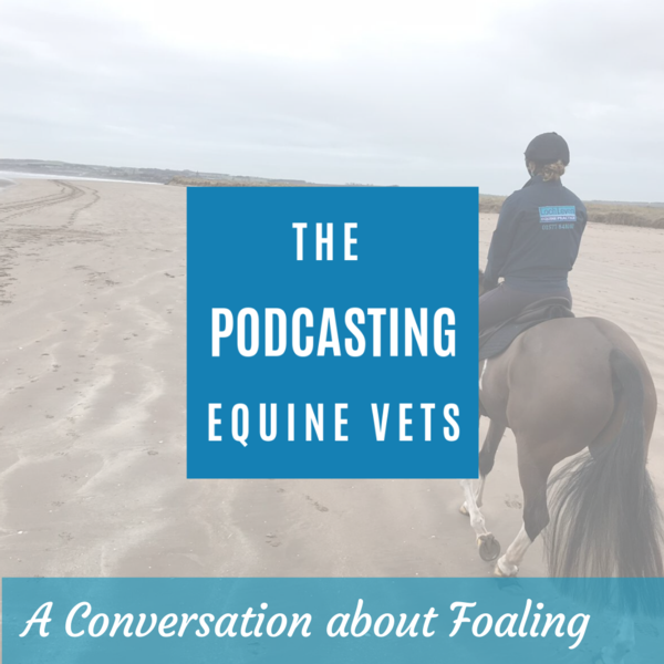 A conversation about foaling - eps ode 19