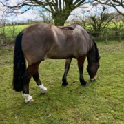 BEVA addresses difficult conversations about equine obesity
