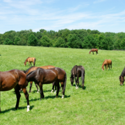 Worming: Know which parasite you are treating and why