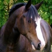 Is your horse a senior super-model?