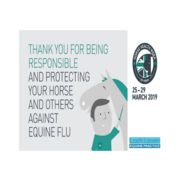 Are You a Responsible Horse Owner?