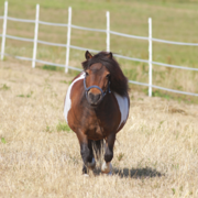 Teamwork, communication and trust are key to tackling equine obesity