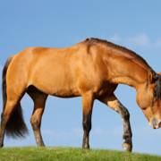 More evidence from BEVA shows traditional frequent worming is unnecessary