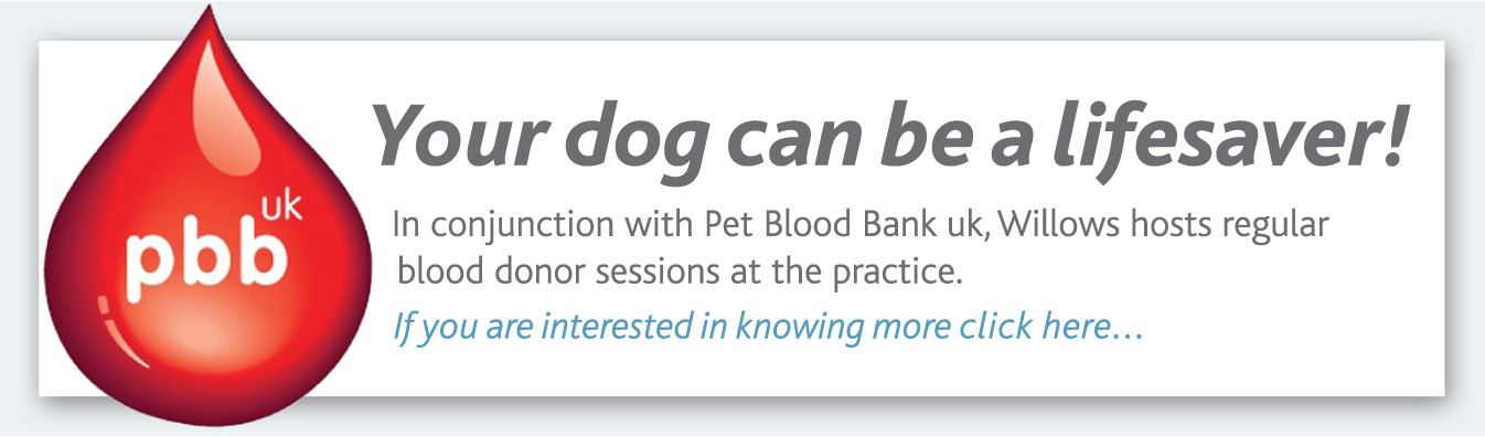 Pet Blood Donor Sessions
