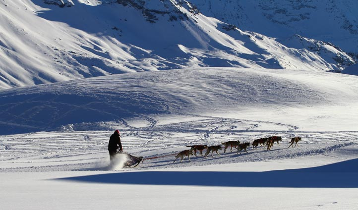 Man Snowmobiling with dogs Alaska