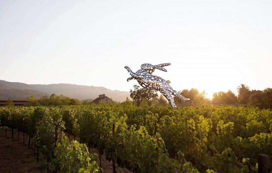View of vineyard on Napa Valley Wine Train