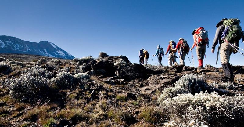 Hikers on Mt Kilimanjaro Trek