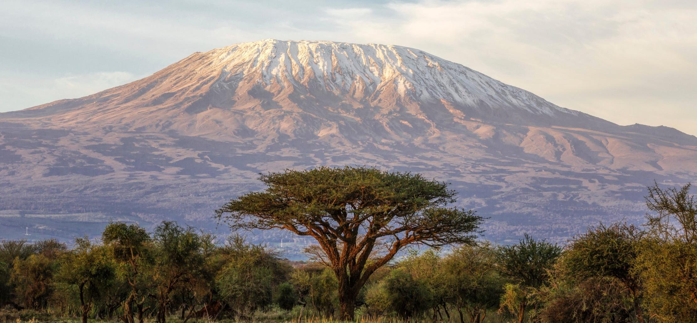 mt kilimanjaro and acacia tree