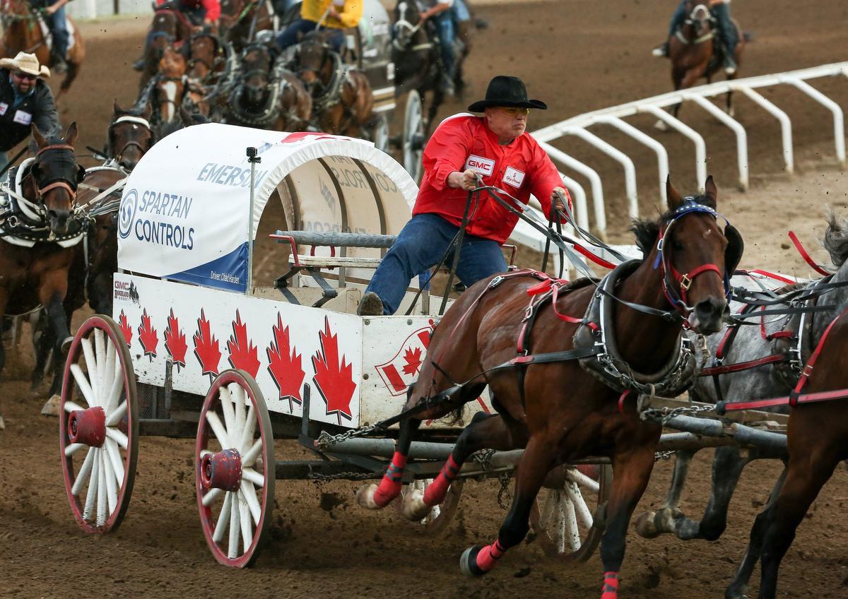 rider and chariot racing at Calgary Stampede