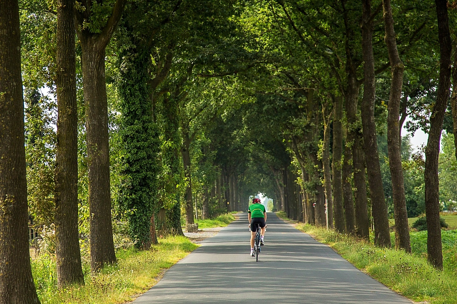 cyclist in avenue of trees on belgium bike and beer tour