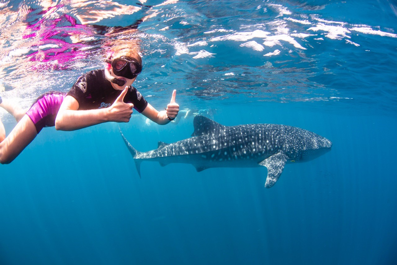 diver with snorkle swimming with whale sharks