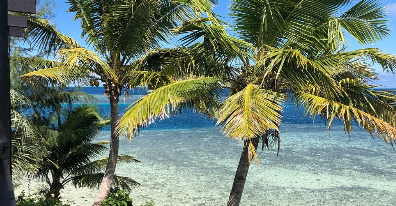 your own private island palm trees and beaches