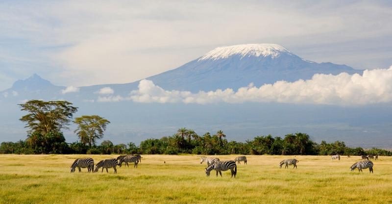mt kilimanjaro with zebras