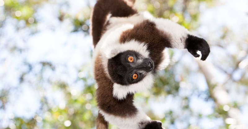 madagascar land of lemurs