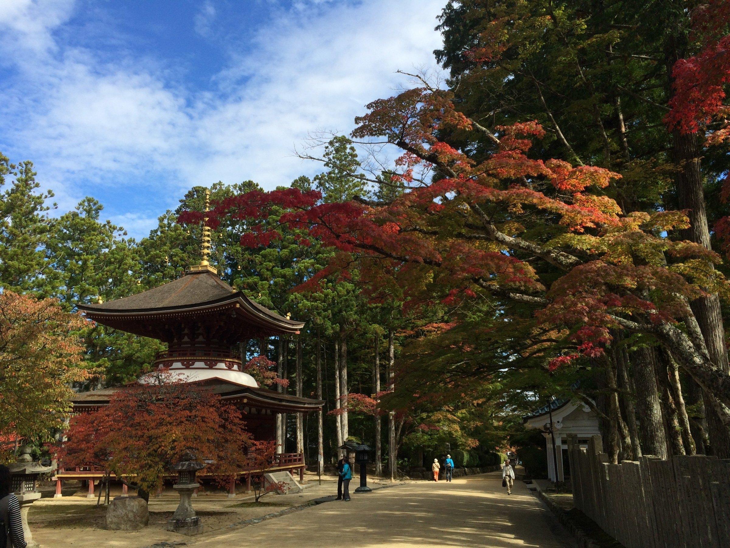 trees and pagoda in shikoku