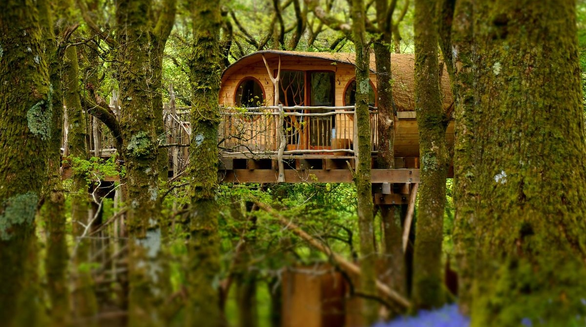 welsh treehouse in the woods