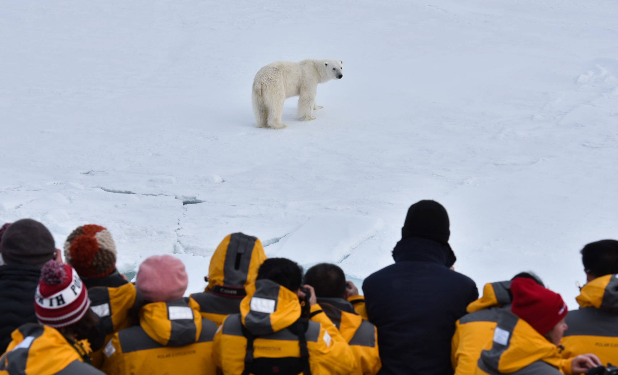 North pole expedition visitors watching polar bear on the ice