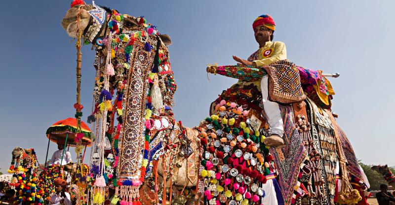 decorated camel at pushkar camel fair