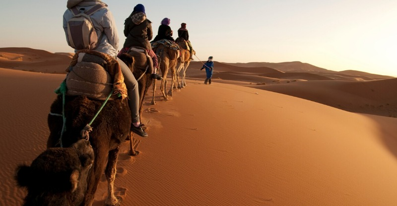 camels in desert on morocco signature tour