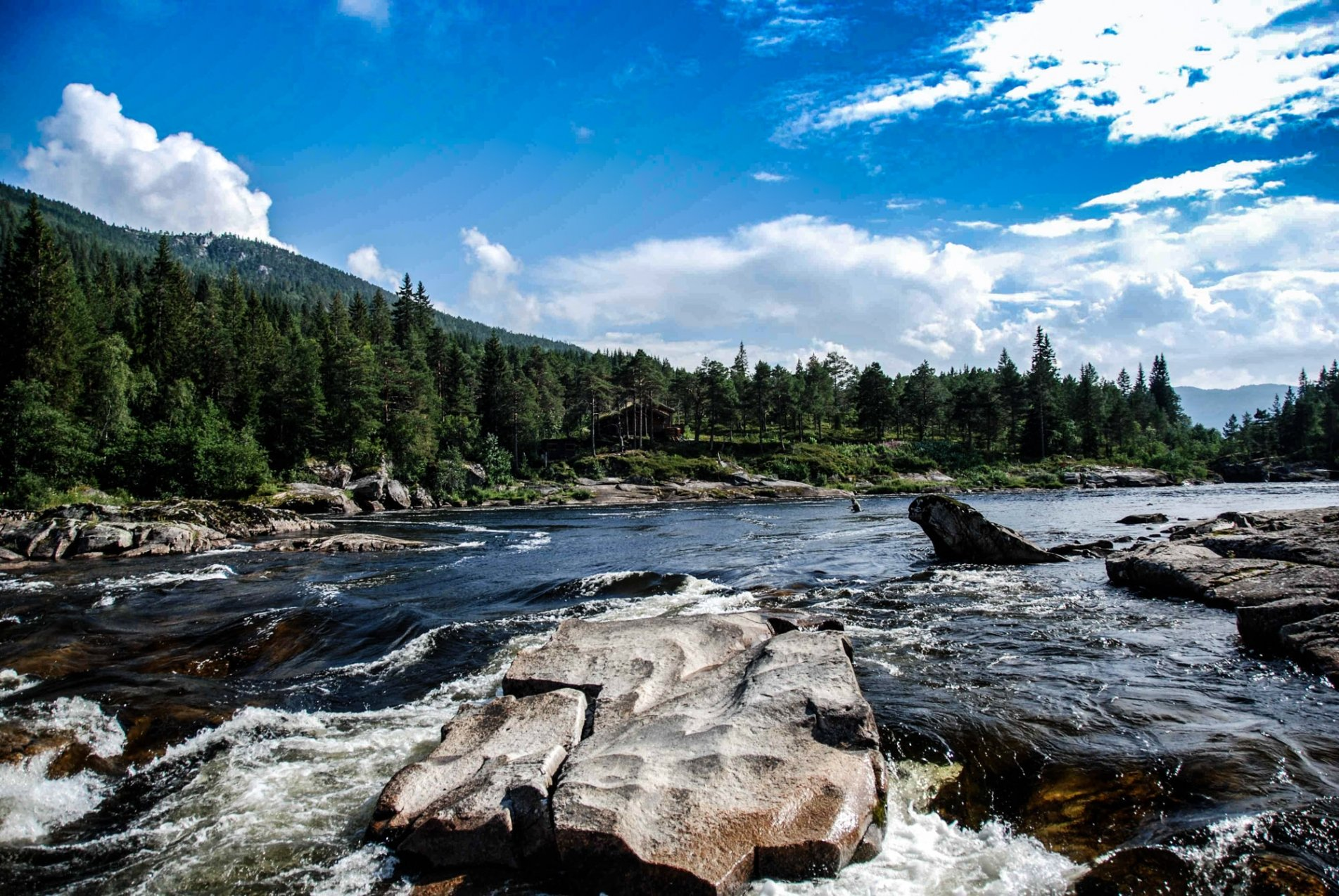 river and forest salmon fishing in norway