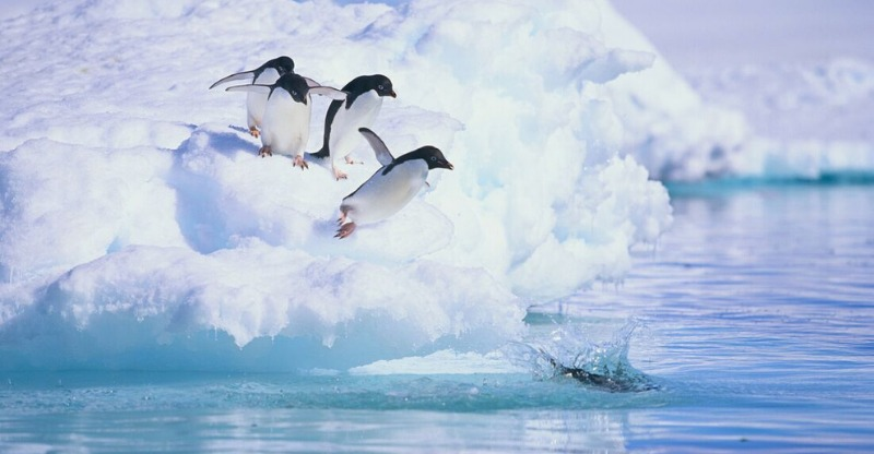 penguines as seen on antarctic adventure